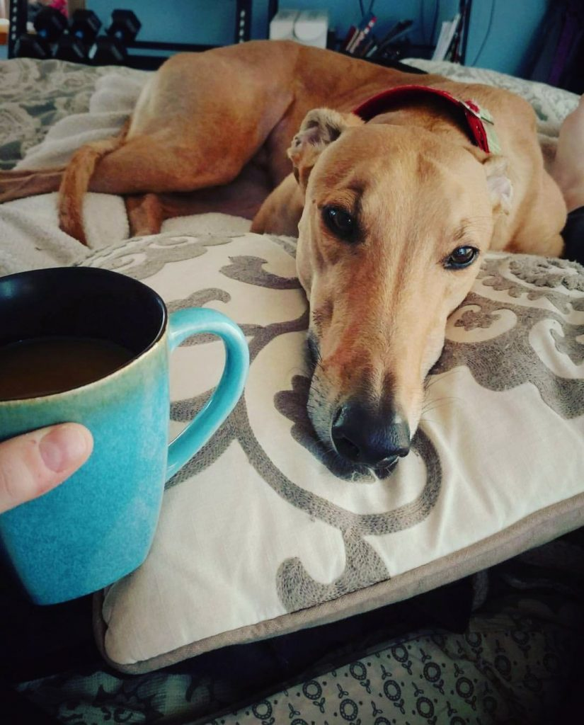 Sometimes, a dog, coffee, and a good book are all the help you need teaching