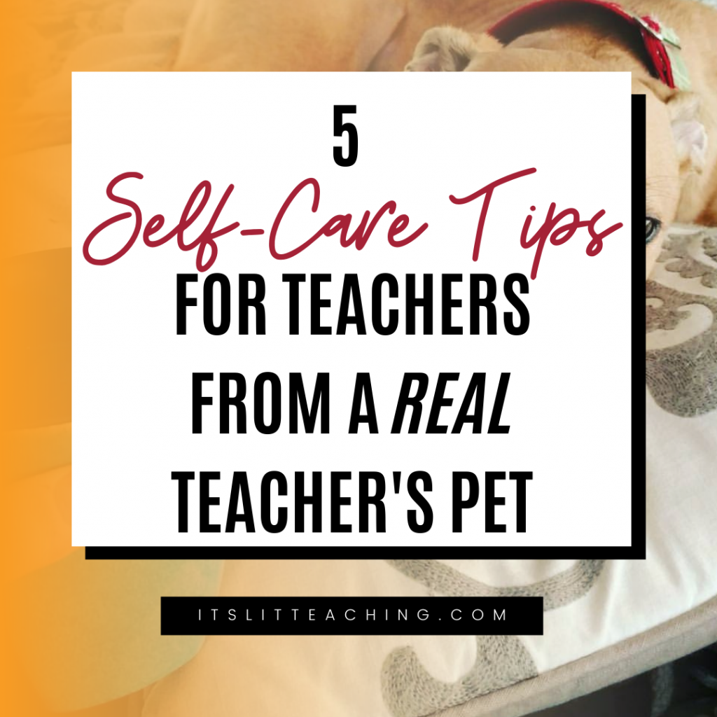 5 Self-care Tips for Teachers from a Real Teacher's Pet